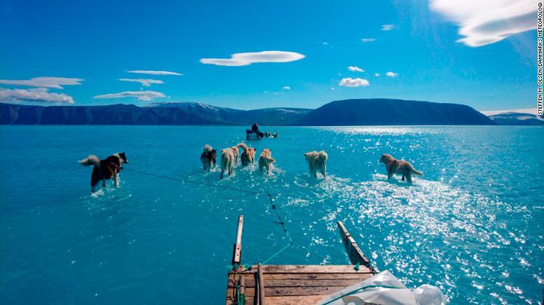 cani da slitta in Groenlandia