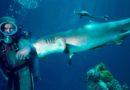 Si è occupata delle riprese degli squali per Spielberg, poi ha dedicato la sua vita a proteggerli