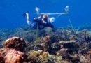 Gli scienziati hanno utilizzato altoparlanti per far sembrare sane le barriere coralline morte. I pesci sono tornati