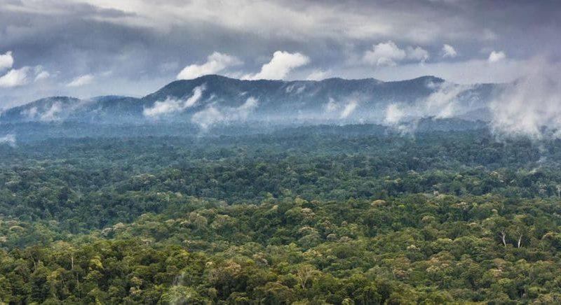 foresta in Brasile