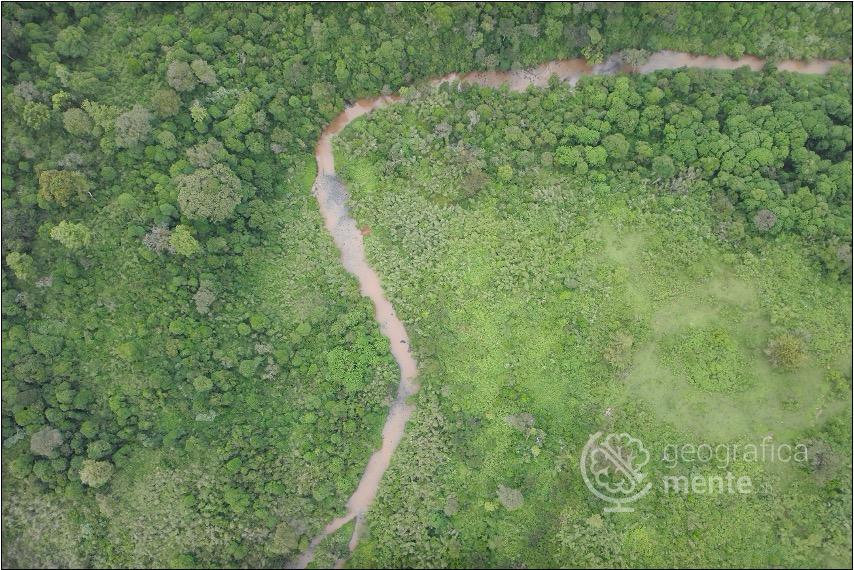 Foresta di transizione – Fotografia di Drone Adventures