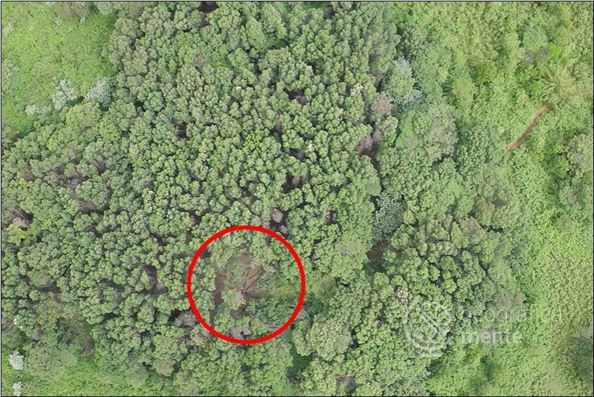 Albero caduto – Fotografia di Drone Adventures elaborata dall'autore