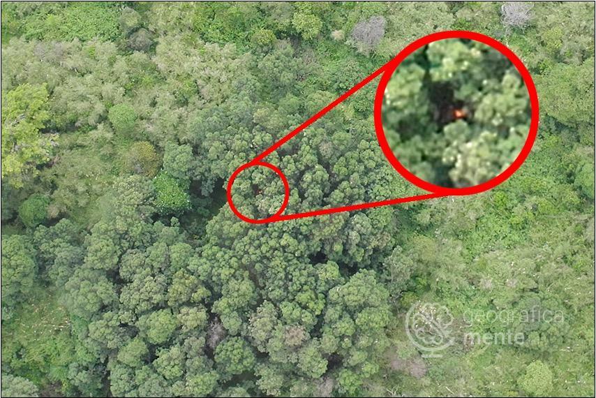 Fuoco tra gli alberi – Fotografia di Drone Adventures elaborata dall'autore