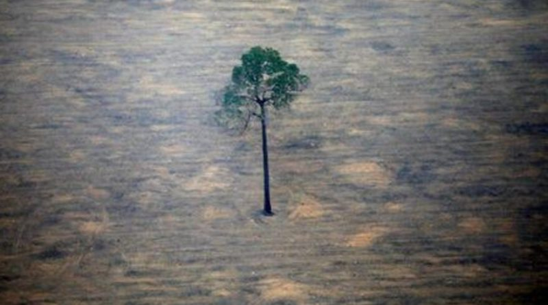 Deforestazione in Amazzonia, Brasile